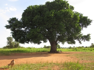 Tree_Benefits_Blog-1