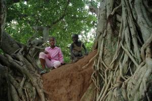 Tree_Benefits_Blog-2