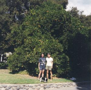 Tree_Blog1