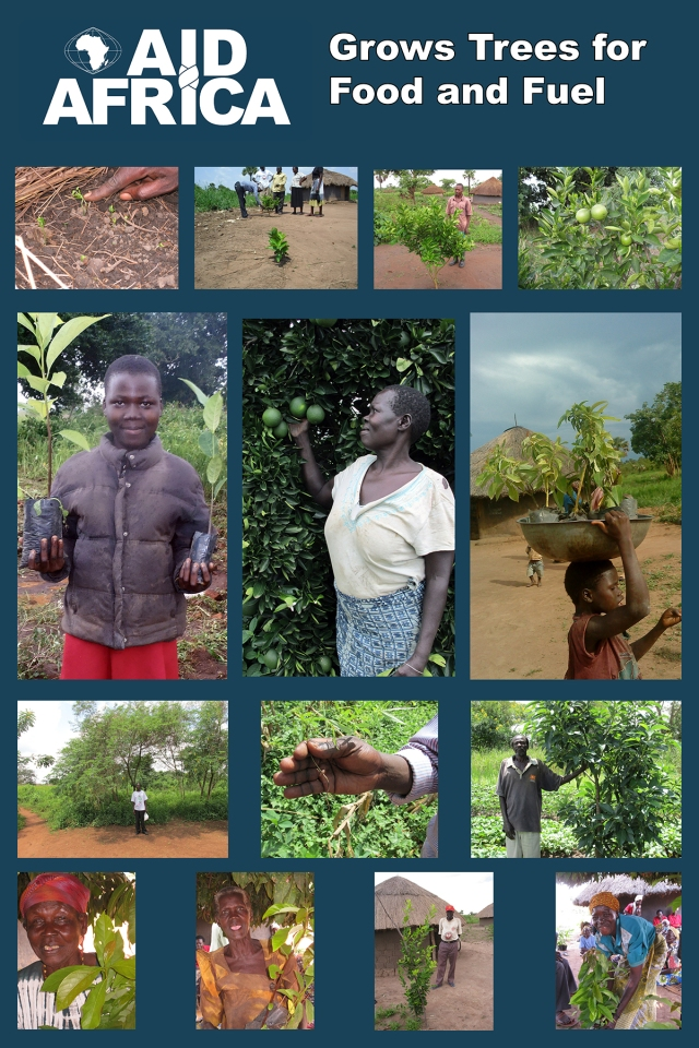 aid-africa-posters-trees-3-resized